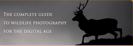 The complete guide to wildlife photography for  the digital age